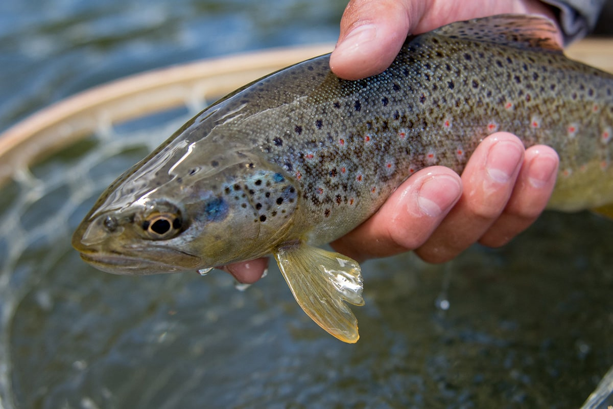 fish-flyfish-gallery-RS