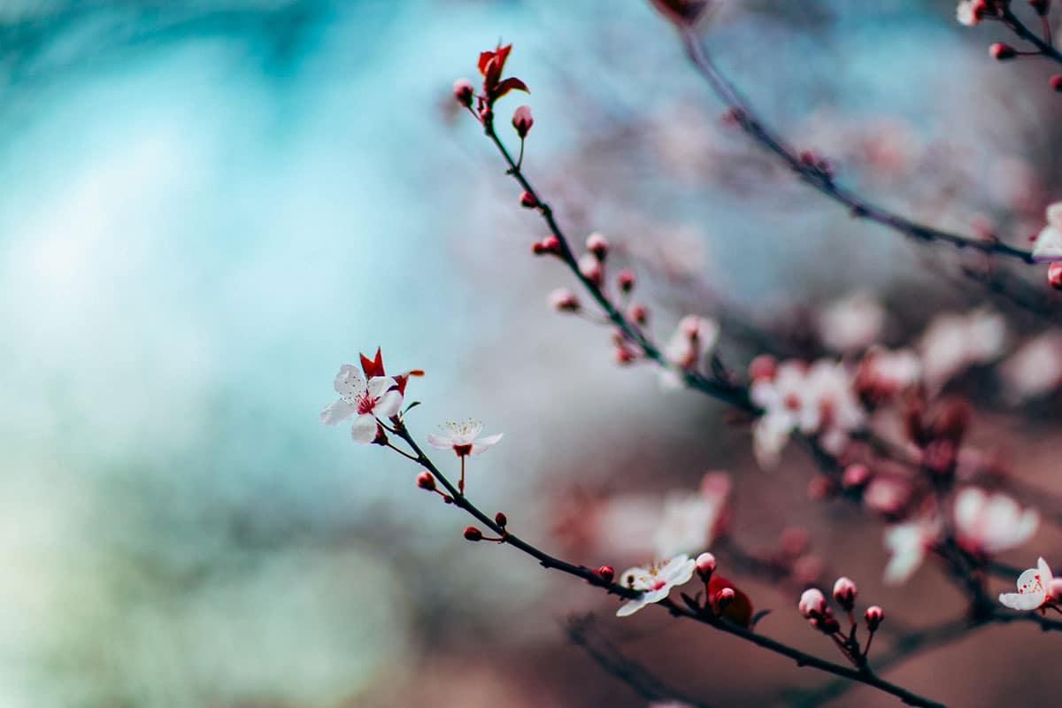 stillpoint-blossom
